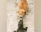 Gato tenta arrancar lagarto da boca de jacaré; Vídeo