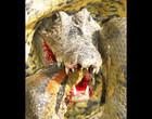 Anaconda e crocodilo travam batalha selvagem e mortal; Vídeo