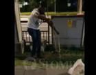 Vídeo: homem corajoso apanha píton no meio de rua movimentada