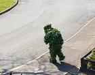 Vizinho fura quarentena vestido de arbusto para fazer compras; fotos