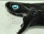 Tubarões esquisitos capturados no oceano Pacífico assusta; Imagens