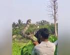 Em vídeo, homem ergue cobra-rei deixando pessoas em choque na Índia