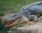 Adolescente é morto por crocodilo ao tentar atravessar rio no Zimbabué