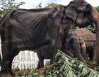 Covid-19: Cerca de 1 mil elefantes podem morrer de fome na Tailândia