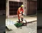 Jiboia de 3 metros é capturada no meio da rua em Alagoas; Vídeo