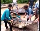 Crocodilo afoga menina, tenta devora-la mas não consegue; Veja o vídeo