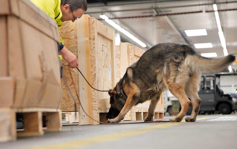 De covid-19 a cobras, sete coisas que podem ser detectadas por cães - Imagem 2