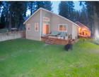 Urso selvagem invade quintal de uma casa e tenta devorar cães; vídeo
