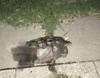 Tartaruga de 30 Kg cai de apartamento e quase mata menina na China