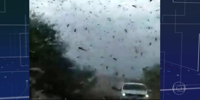 Nuvem de gafanhotos está a 130 km do Brasil