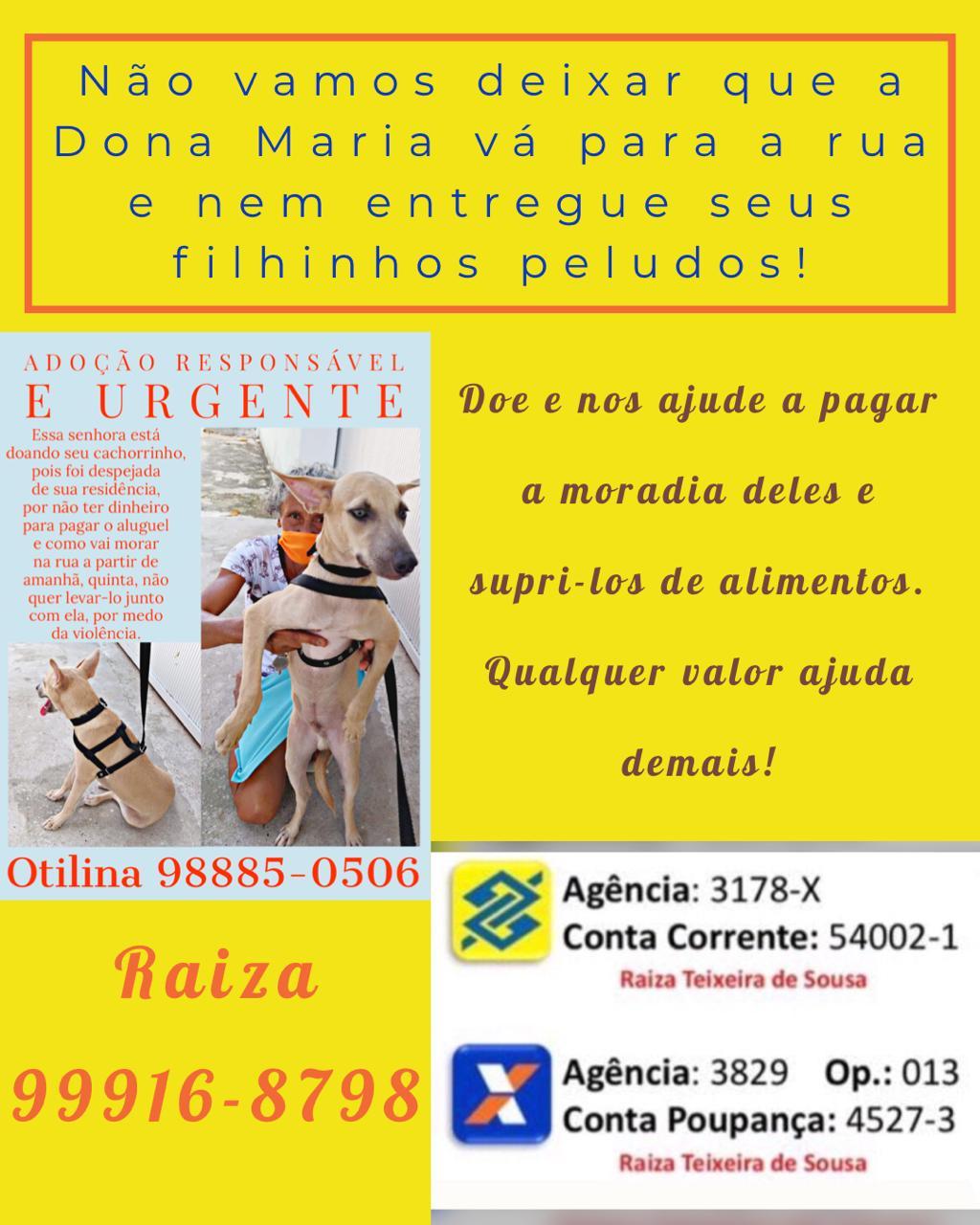 Idosa que iria doar cão por ameaça de despejo ganhará casa em Teresina - Imagem 2