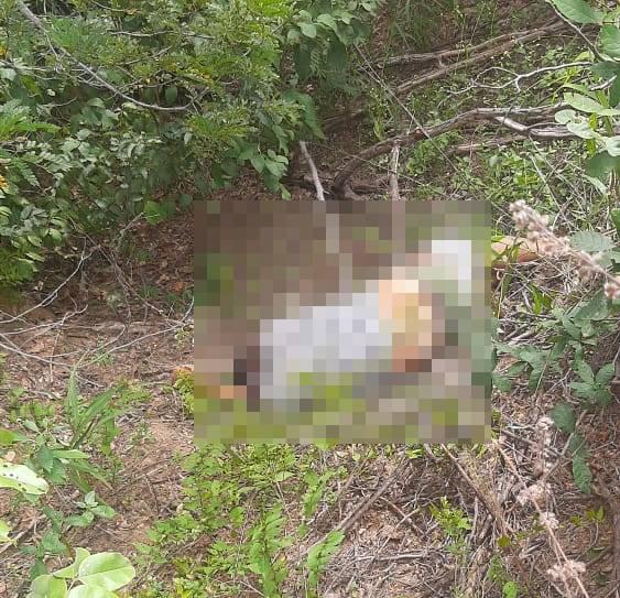 Polícia apreende adolescente suspeito de matar irmão de prefeita no PI - Imagem 1