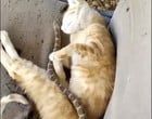 Gato escapa de ataque de cobra após ela enroscar em seu corpo; Vídeo