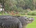 Jacaré gigante é filmado durante passeio e assusta internautas; Vídeo