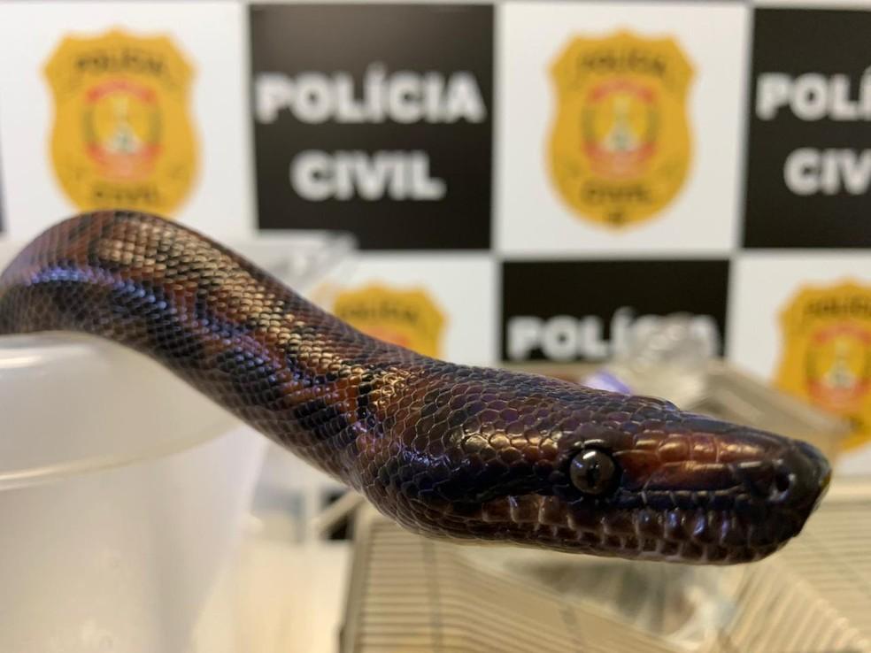Polícia Civil do DF apreende mais uma cobra do estudante de medicina veterinária que foi picado por naja — Foto: PCDF/Divulgação
