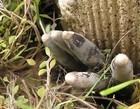 """Cogumelos parecidos com """"dedos de zumbi"""" viralizam nas redes"""
