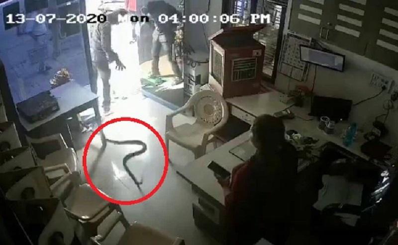 Homem ainda soltou mais duas cobras dentro do posto-Foto:Reprodução NDTV