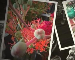 LEMS em casa: use arranjos para decorar sua mesa posta