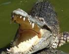 Crocodilo gigante arrasta jovem de 15 anos para dentro de rio; vídeo