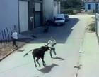 Homem morre após ser atacado por boi em Pernambuco; assista flagrante