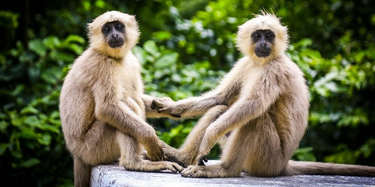 Amizade é comportamento comum entre os animais. Confira!
