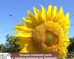 Conheça os significados do Girassol