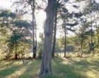 Google Maps captura imagem de fantasma de criança em cemitério nos EUA