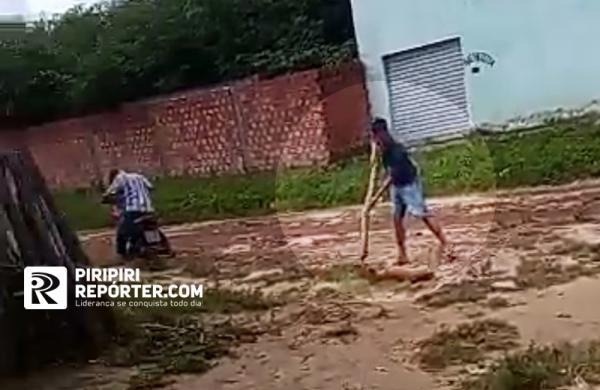 Homem é flagrado matando cachorro a pauladas no Norte do Piauí; vídeo! - Imagem 1