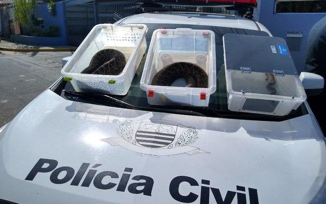 Animais foram apreendidos (Ralph Siqueira/ Divulgação)