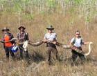 Virou praga: caçadores tentam controlar pítons em reserva nos EUA