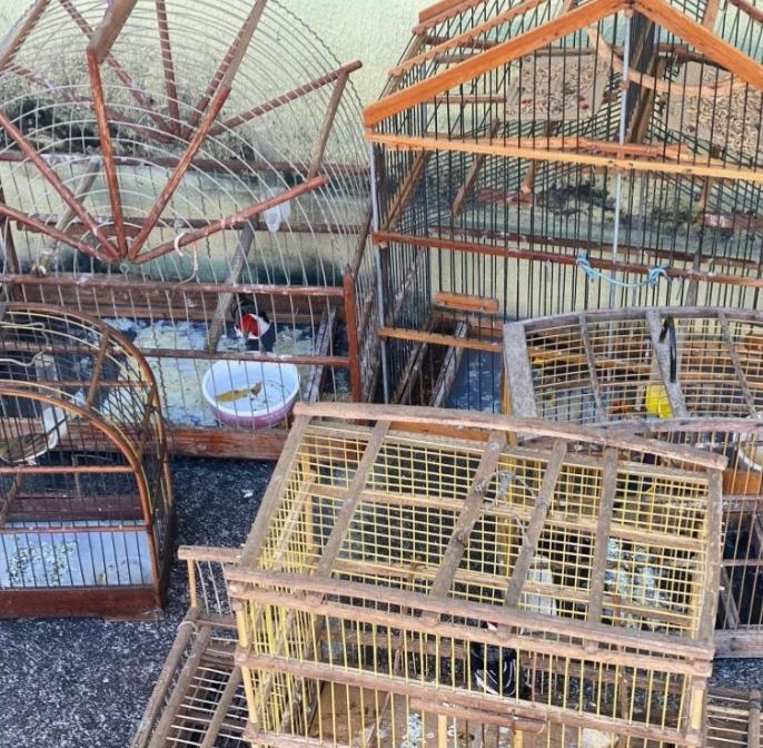 Aves resgatadas pelo Batalhão da Polícia Ambiental (foto: BPA)
