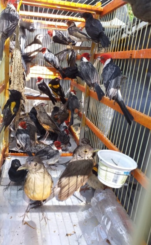Gaiolas são prisões (foto: BPA)