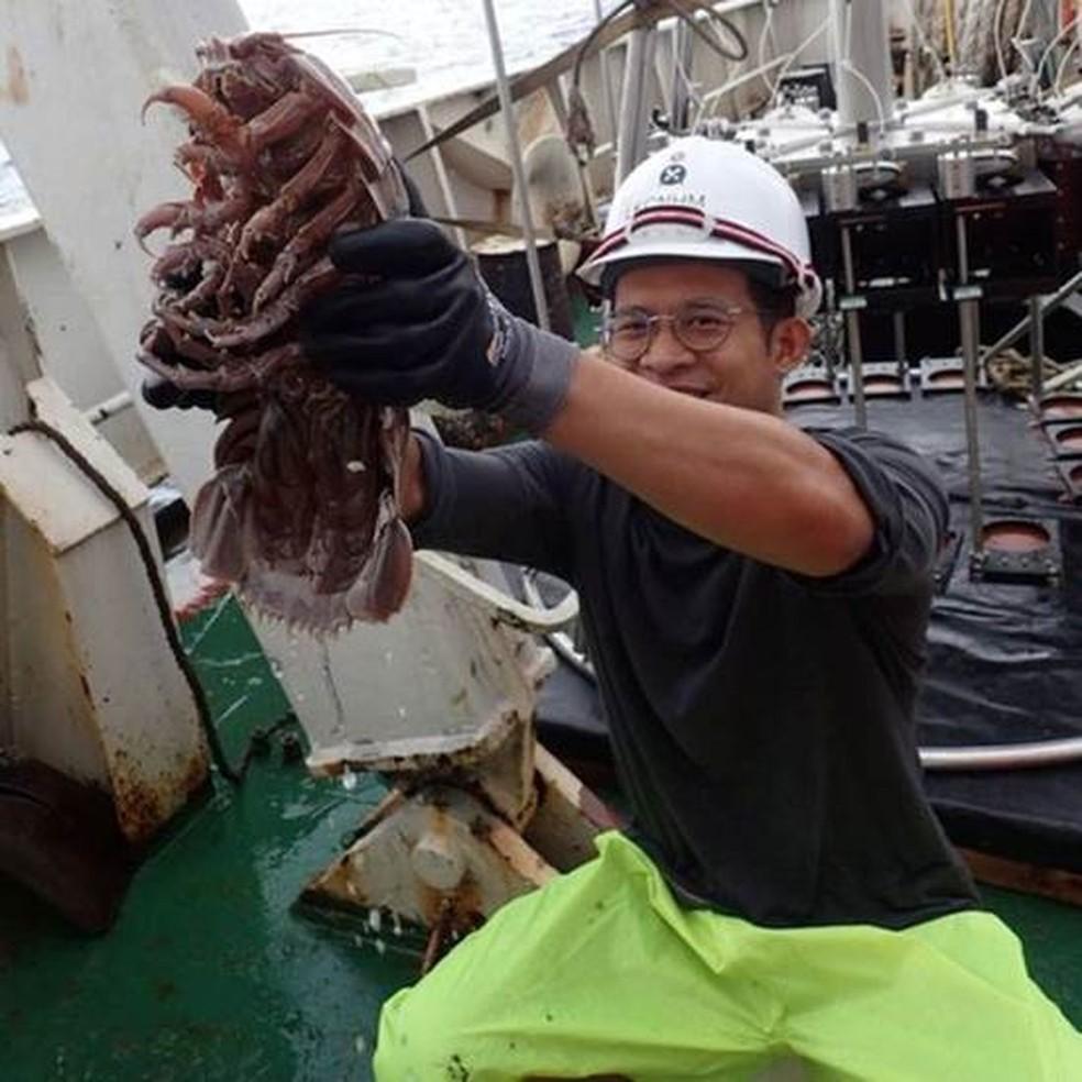 """Inseto gigante """"Darth Vather"""" é descoberto na Indonésia"""