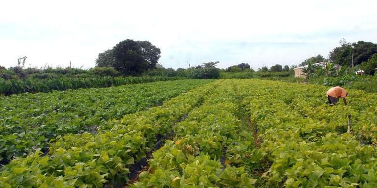 Agricultores familiares do Nordeste terão oferta de consultoria online
