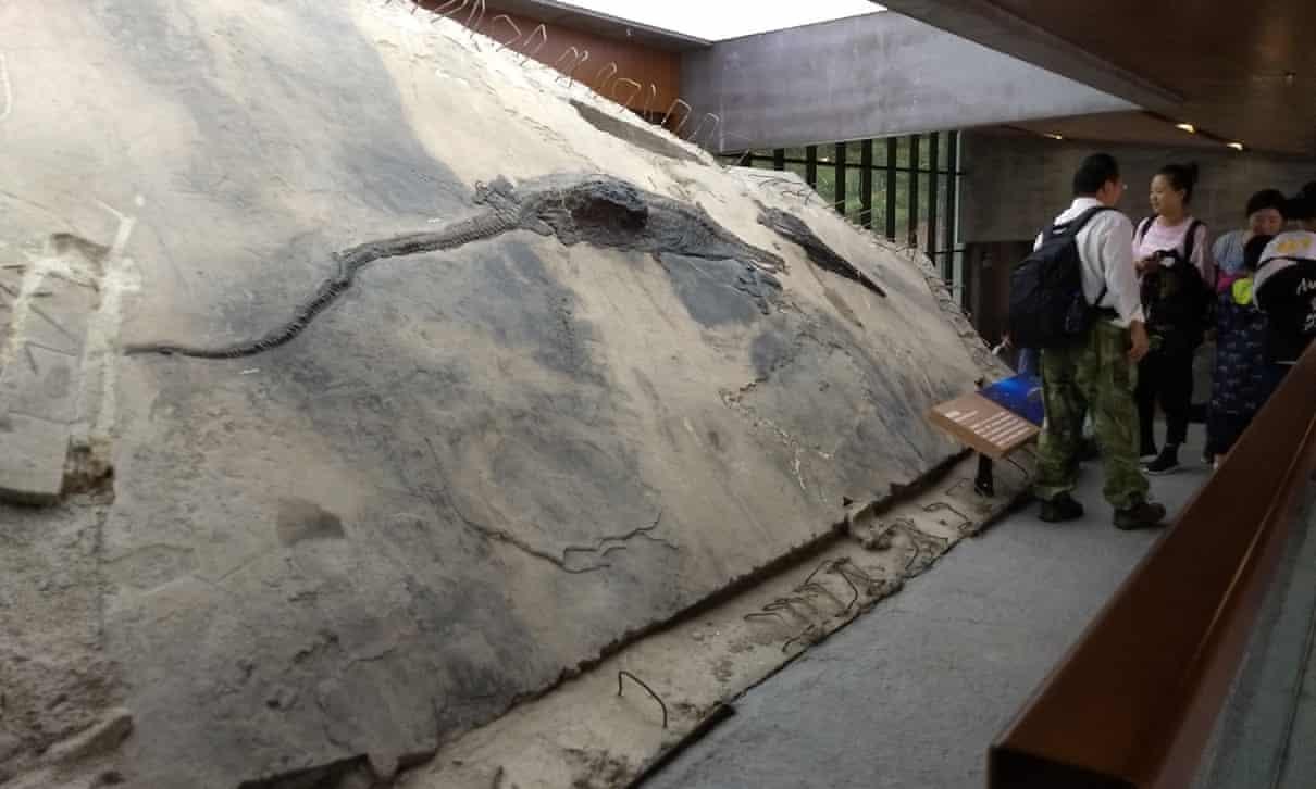 Imagem mostra ictiossauro com conteúdo do estômago visível (foto: iScience)