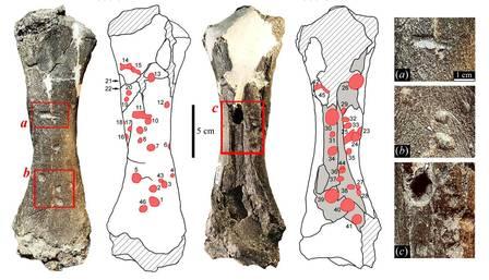 Fóssil revela que crocodilo tinha a mordida mais forte já registrada - Imagem 2