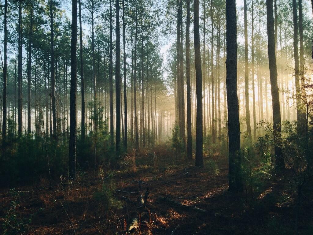 Floresta (imagem: Unsplash)