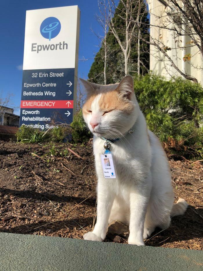 Gato que frequentava hospital é contratado como segurança  - Imagem 1
