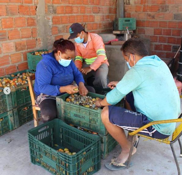 Ambev compra 200 toneladas de caju para produção de cerveja piauiense - Imagem 1