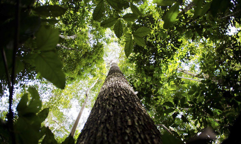 Amazônia (Foto: Marcelo Camargo/Agência Brasil)