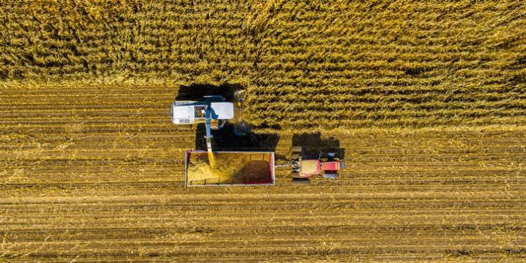 Produção de grãos deve alcançar 278 milhões de toneladas em 2021