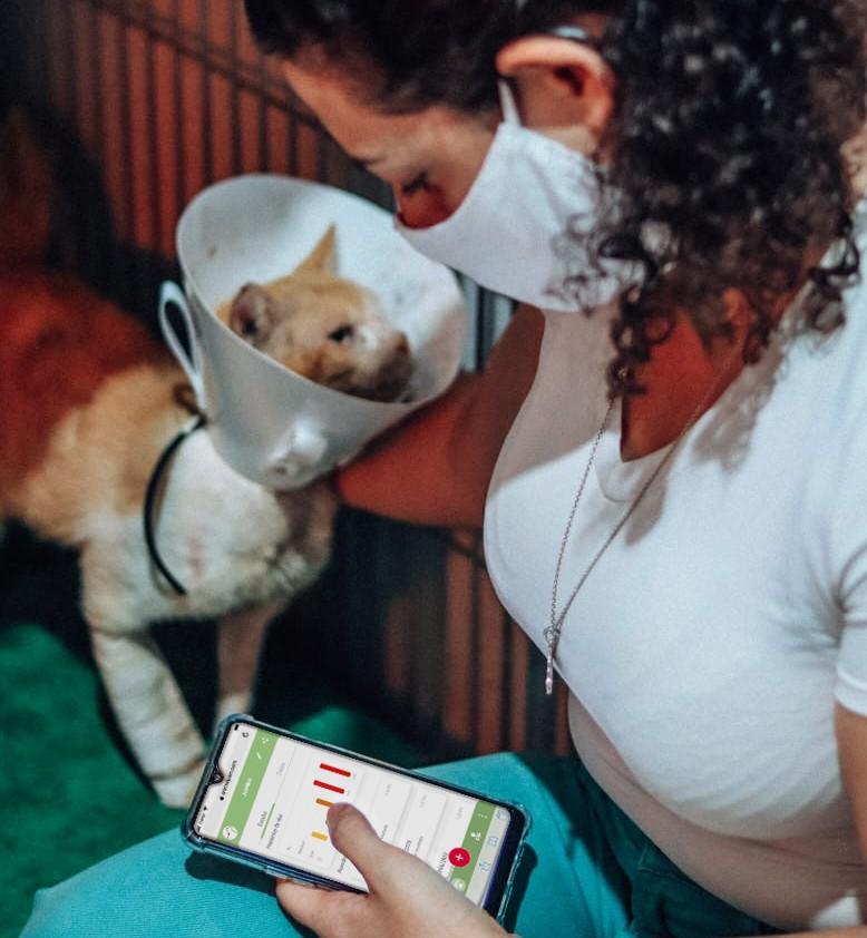 App está baseado na escala de dor para gatas castradas (imagem: Animal Pain)