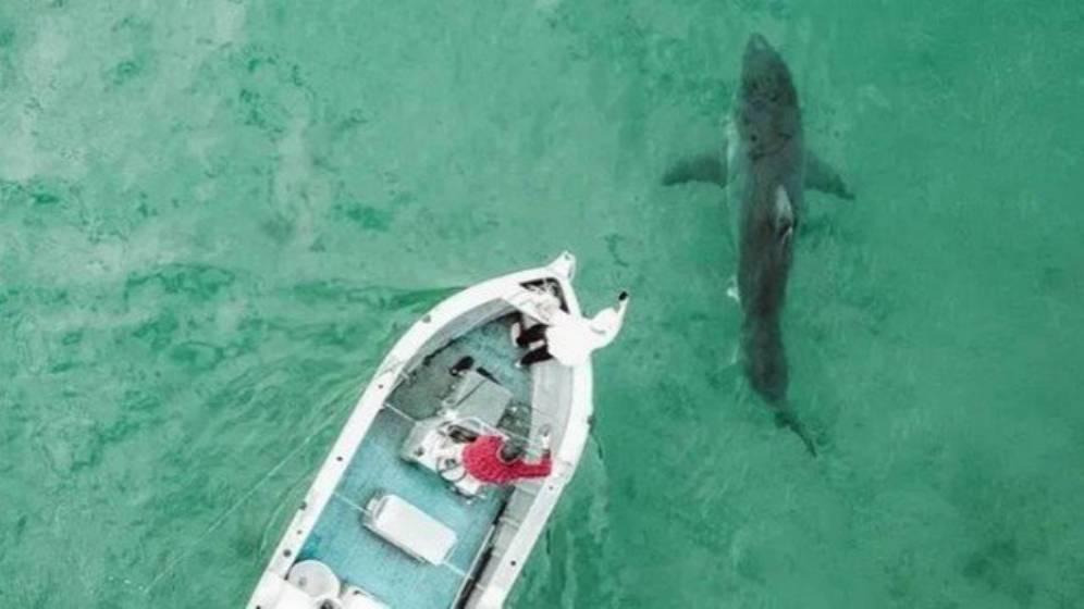 Tubarão gigantesco é visto em praia na Austrália (Reprodução)