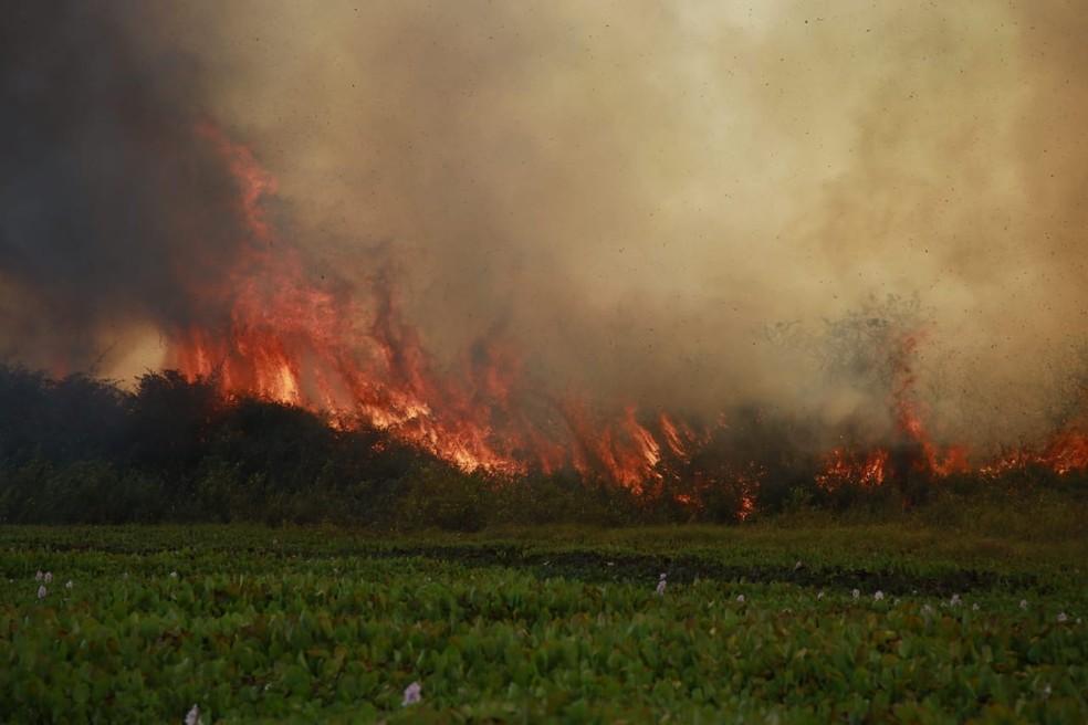 Incêndios no Pantanal (Jeferson Prado)