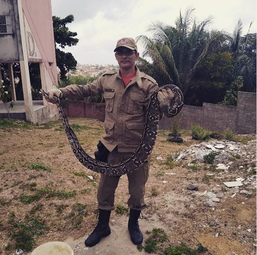 Corpo de Bombeiros capturou a cobra - Foto: Divulgaçao