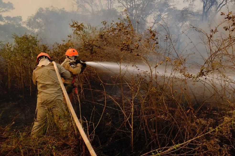 Bombeiros tentam controlar as chamas no Pantanal — Foto: Corpo de Bombeiros