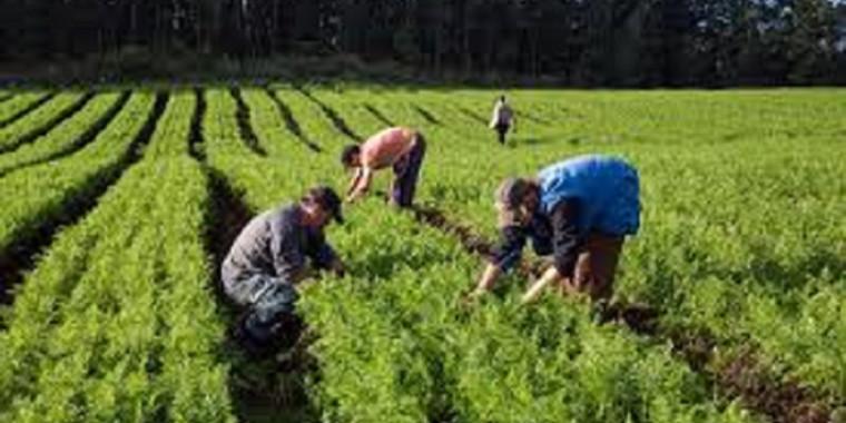 Ministério da Agricultura abre prazo para Garantia-Safra 2020/2021