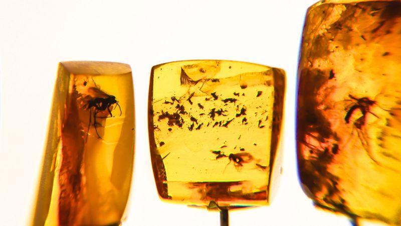 Presos em resinas, fósseis contam a história da evolução das espécies por milhões de anos (Foto: Getty Images)