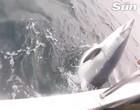 Pescador trava luta com tubarão de 3 m por horas em alto mar; assista!