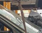 Cobra é encontrada dentro de carro durante conserto em oficina; vídeo